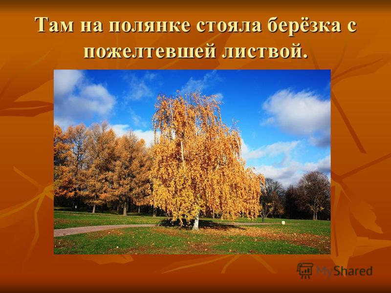 Там на полянке стояла берёзка с пожелтевшей листвой.