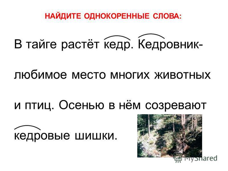 В тайге растёт кедр. Кедровник- любимое место многих животных и птиц. Осенью в нём созревают кедровые шишки. НАЙДИТЕ ОДНОКОРЕННЫЕ СЛОВА: