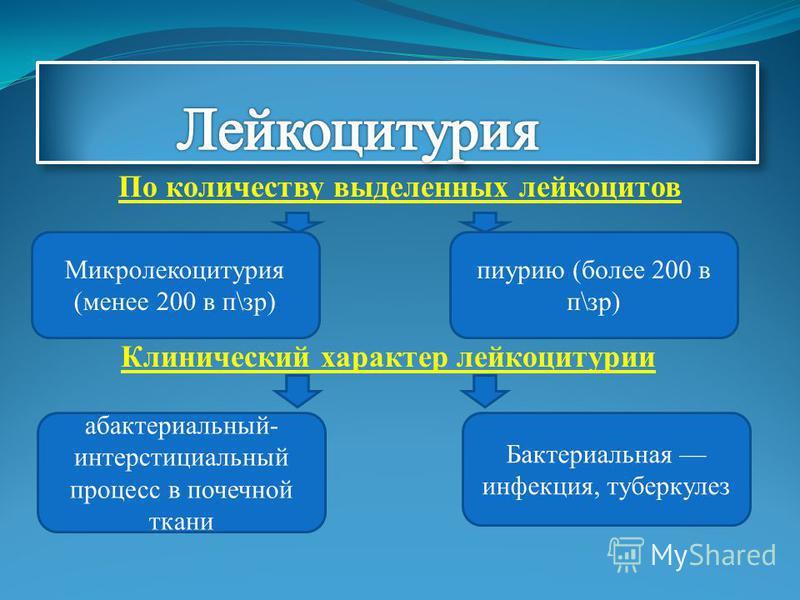 По количеству выделенных лейкоцитов Клинический характер лейкоцитурии Микролекоцитурия (менее 200 в п\зр) пиурию (более 200 в п\зр) абактериальный- интерстициальный процесс в почечной ткани Бактериальная инфекция, туберкулез