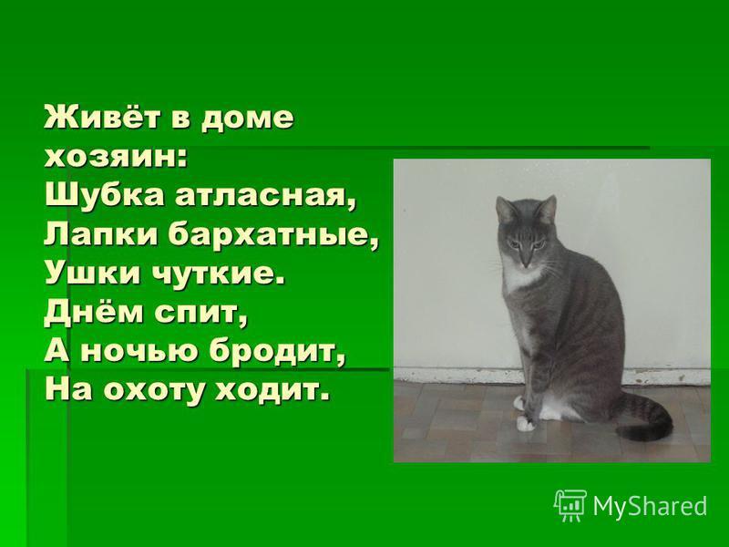 Живёт в доме хозяин: Шубка атласная, Лапки бархатные, Ушки чуткие. Днём спит, А ночью бродит, На охоту ходит.