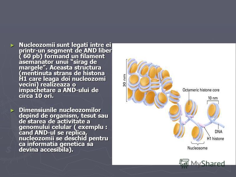 Nucleozomii sunt legati intre ei printr-un segment de AND liber ( 60 pb) formand un filament asemanator unui sirag de margele. Aceasta structura (mentinuta strans de histona H1 care leaga doi nucleozomi vecini) realizeaza o impachetare a AND-ului de