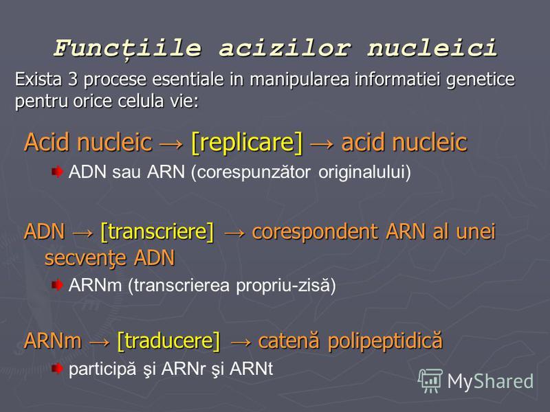 Funcţiile acizilor nucleici Acid nucleic [replicare] acid nucleic ADN sau ARN (corespunzător originalului) ADN [transcriere] corespondent ARN al unei secvenţe ADN ARNm (transcrierea propriu-zisă) ARNm [traducere] catenă polipeptidică participă şi ARN