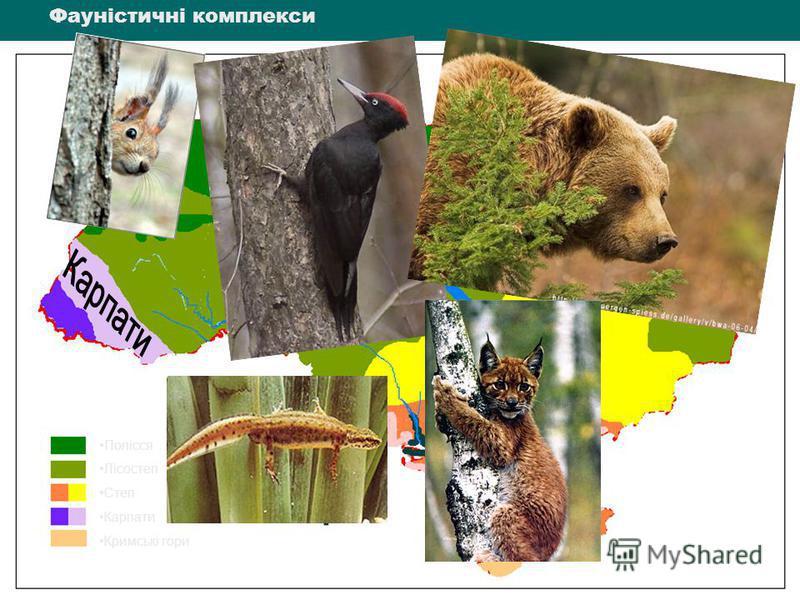 Полісся Лісостеп Степ Карпати Кримські гори Полісся Лісостеп Степ Карпати Кримські гори Фауністичні комплекси