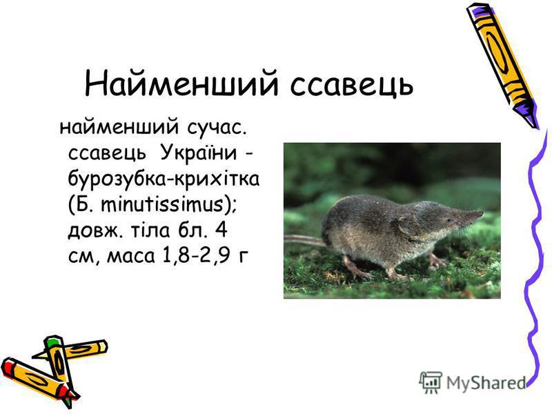 Найменший ссавець найменший сучас. ссавець України - бурозубка-крихітка (Б. mіnutissіmus); довж. тіла бл. 4 см, маса 1,8-2,9 г