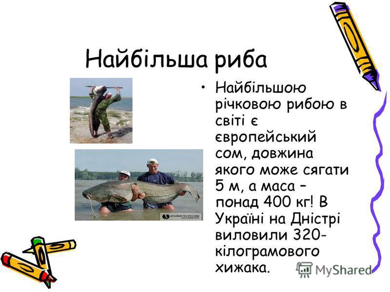 Найбільша риба Найбільшою річковою рибою в світі є європейський сом, довжина якого може сягати 5 м, а маса – понад 400 кг! В Україні на Дністрі виловили 320- кілограмового хижака.
