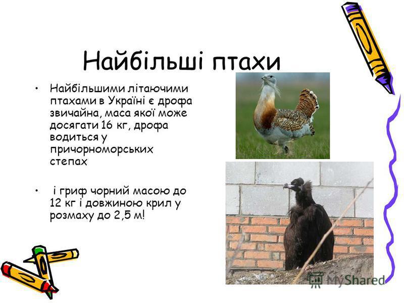 Найбільші птахи Найбільшими літаючими птахами в Україні є дрофа звичайна, маса якої може досягати 16 кг, дрофа водиться у причорноморських степах і гриф чорний масою до 12 кг і довжиною крил у розмаху до 2,5 м!