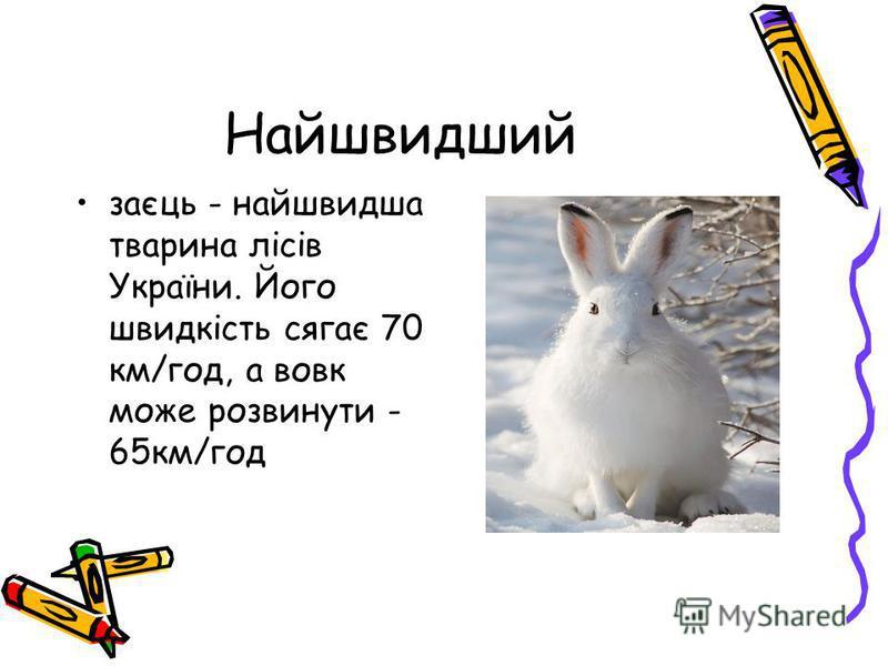 Найшвидший заєць - найшвидша тварина лісів України. Його швидкість сягає 70 км/год, а вовк може розвинути - 65км/год