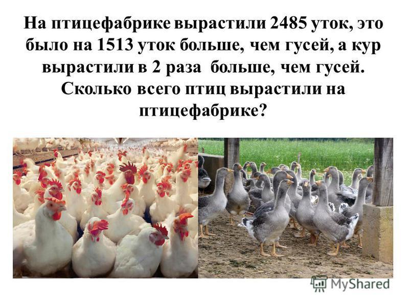 На птицефабрике вырастили 2485 уток, это было на 1513 уток больше, чем гусей, а кур вырастили в 2 раза больше, чем гусей. Сколько всего птиц вырастили на птицефабрике?