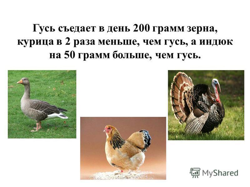 Гусь съедает в день 200 грамм зерна, курица в 2 раза меньше, чем гусь, а индюк на 50 грамм больше, чем гусь.
