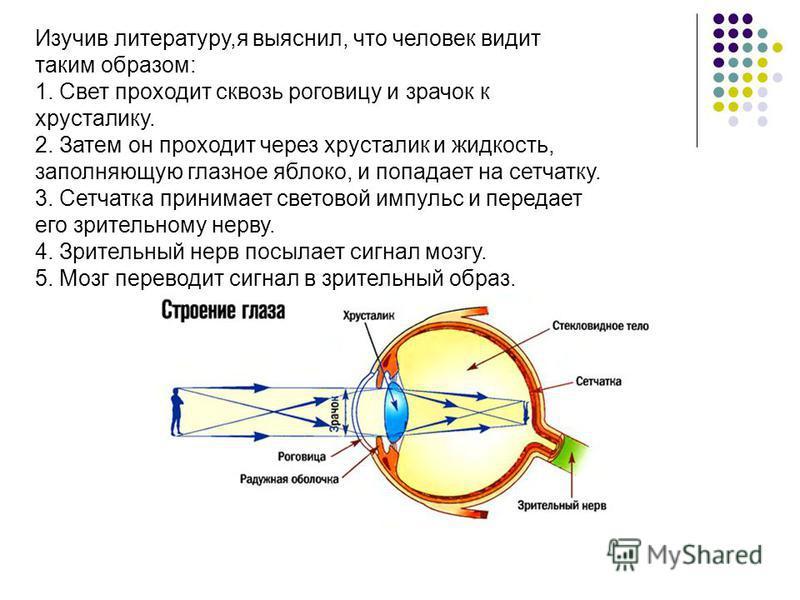 Изучив литературу,я выяснил, что человек видит таким образом: 1. Свет проходит сквозь роговицу и зрачок к хрусталику. 2. Затем он проходит через хрусталик и жидкость, заполняющую глазное яблоко, и попадает на сетчатку. 3. Сетчатка принимает световой