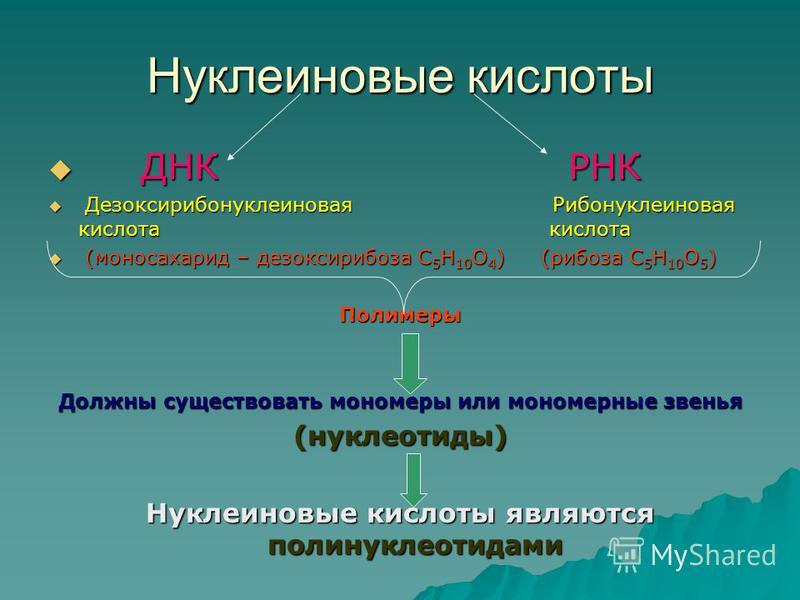 Нуклеиновые кислоты Д ДНК Р РНК Д Дезоксирибонуклеиновая Рибонуклеиновая кислота кислота ( (моносахарид – дезоксирибоза С5Н10О4) (рибоза С5Н10О5) Полимеры Должны существовать мономеры или мономерные звенья (нуклеотиды) Нуклеиновые кислоты являются по