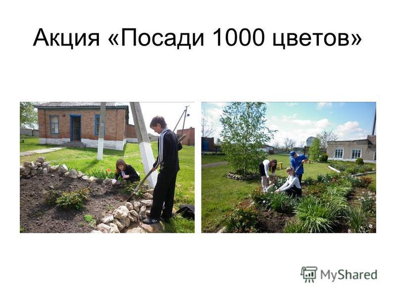 Акция «Посади 1000 цветов»