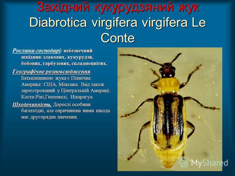 Західний кукурудзяний жук Diabrotica virgifera virgifera Le Conte : небезпечний шкідник злакових, кукурудзи, бобових, гарбузових, складноцвітих. Рослини-господарі : небезпечний шкідник злакових, кукурудзи, бобових, гарбузових, складноцвітих. Географі