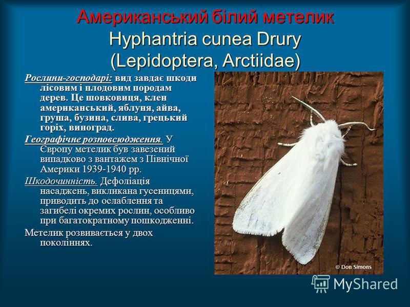 Американський білий метелик Hyphantria cunea Drury (Lepidoptera, Arctiidae) Рослини-господарі: вид завдає шкоди лісовим і плодовим породам дерев. Це шовковиця, клен американський, яблуня, айва, груша, бузина, слива, грецький горіх, виноград. Географі