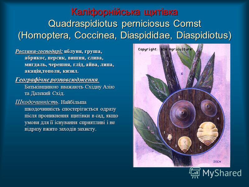 Каліфорнійська щитівка Quadraspidiotus perniciosus Comst (Homoptera, Coccinea, Diaspididae, Diaspidiotus) Рослини-господарі: яблуня, груша, абрикос, персик, вишня, слива, мигдаль, черешня, глід, айва, липа, акація,тополя, кизил. Географічне розповсюд