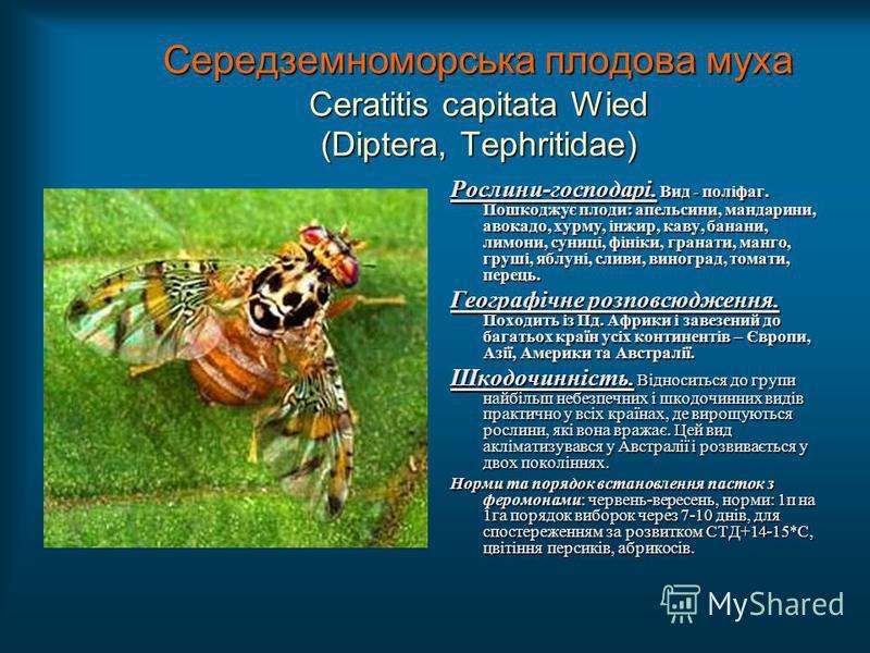 Середземноморська плодова муха Ceratitis capitata Wied (Diptera, Tephritidae) Рослини-господарі. Вид - поліфаг. Пошкоджує плоди: апельсини, мандарини, авокадо, хурму, інжир, каву, банани, лимони, суниці, фініки, гранати, манго, груші, яблуні, сливи,