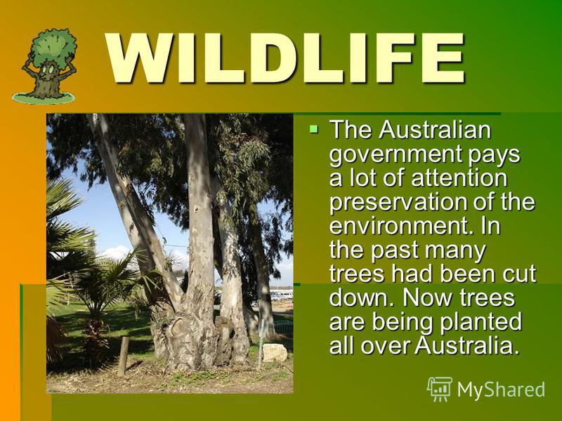 WILDLIFE The Australian government pays a lot of attention preservation of the environment. In the past many trees had been cut down. Now trees are being planted all over Australia. The Australian government pays a lot of attention preservation of th