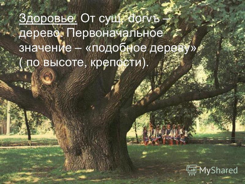Здоровье. От сущ. dorvъ – дерево. Первоначальное значение – «подобное дереву» ( по высоте, крепости).