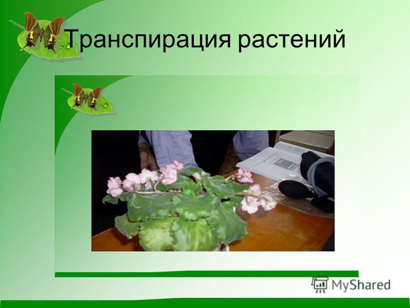 Транспирация растений