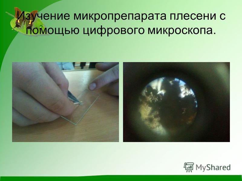 Изучение микропрепарата плесени с помощью цифрового микроскопа.