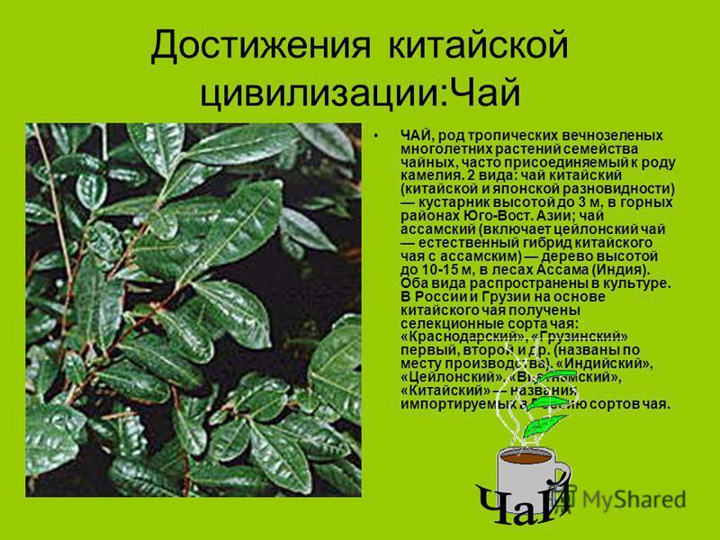 Достижения китайской цивилизации:Чай ЧАЙ, род тропических вечнозеленых многолетних растений семейства чайных, часто присоединяемый к роду камелия. 2 вида: чай китайский (китайской и японской разновидности) кустарник высотой до 3 м, в горных районах Ю