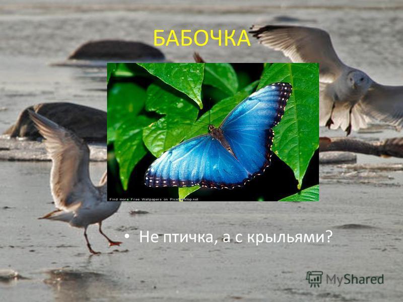 БАБОЧКА Не птичка, а с крыльями?