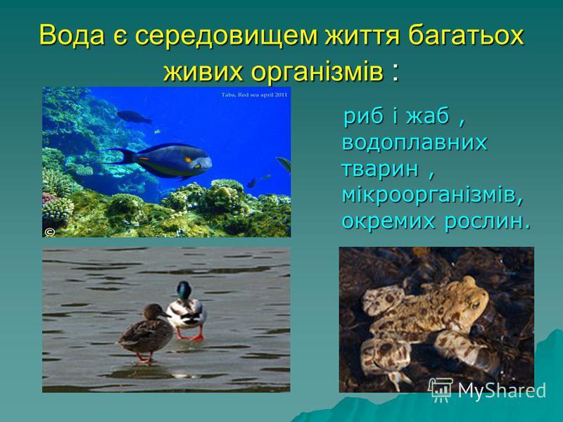 Вода є середовищем життя багатьох живих організмів : риб і жаб, водоплавних тварин, мікроорганізмів, окремих рослин. риб і жаб, водоплавних тварин, мікроорганізмів, окремих рослин.