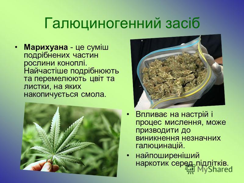 Галюциногенний засіб Марихуана - це суміш подрібнених частин рослини коноплі. Найчастіше подрібнюють та перемелюють цвіт та листки, на яких накопичується смола. Впливає на настрій і процес мислення, може призводити до виникнення незначних галюцинацій