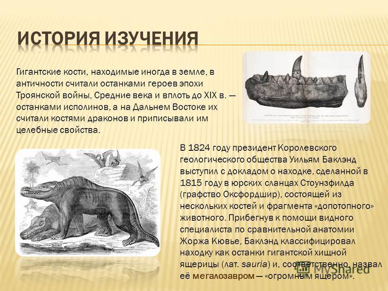Гигантские кости, находимые иногда в земле, в античности считали останками героев эпохи Троянской войны, Средние века и вплоть до XIX в. останками исполинов, а на Дальнем Востоке их считали костями драконов и приписывали им целебные свойства. В 1824