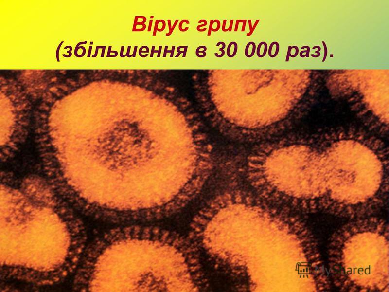 Вірус грипу (збільшення в 30 000 раз).