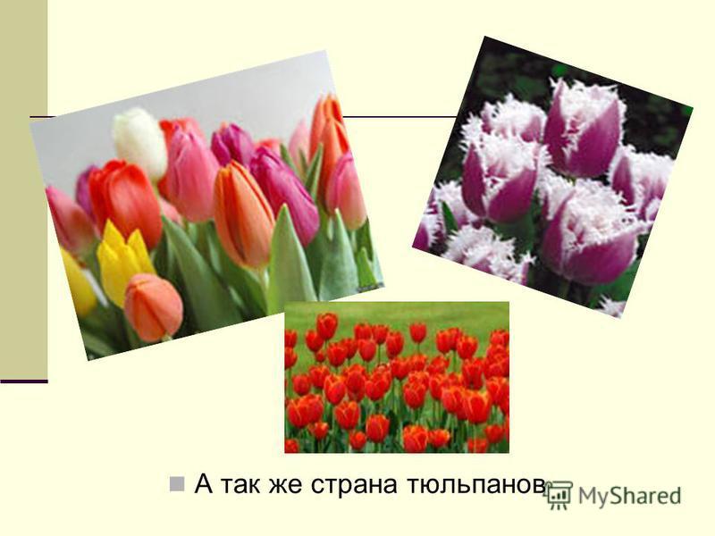 А так же страна тюльпанов