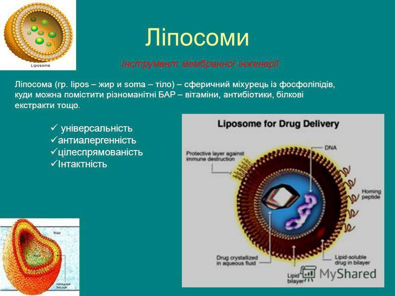 Ліпосоми Ліпосома (гр. lipos – жир и soma – тіло) – сферичний міхурець із фосфоліпідів, куди можна помістити різноманітні БАР – вітаміни, антибіотики, білкові екстракти тощо. універсальність антиалергенність цілеспрямованість Інтактність Інструмент м