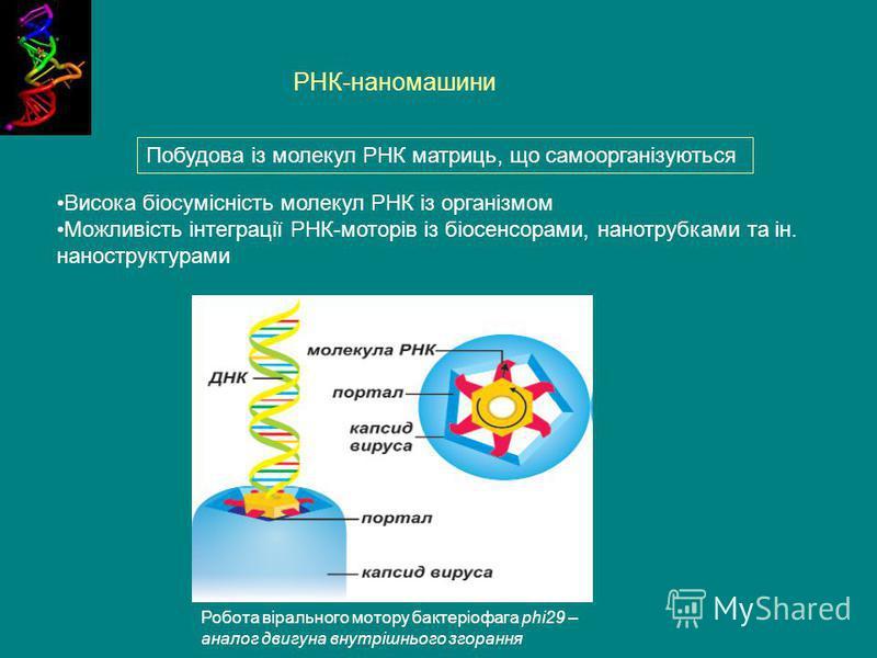 РНК-наномашини Робота вірального мотору бактеріофага phi29 – аналог двигуна внутрішнього згорання Висока біосумісність молекул РНК із організмом Можливість інтеграції РНК-моторів із біосенсорами, нанотрубками та ін. наноструктурами Побудова із молеку