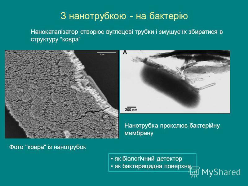 З нанотрубкою - на бактерію Фото ковра із нанотрубок Нанотрубка проколює бактерійну мембрану Нанокаталізатор створює вуглецеві трубки і змушує їх збиратися в структуру ковра як біологічний детектор як бактерицидна поверхня
