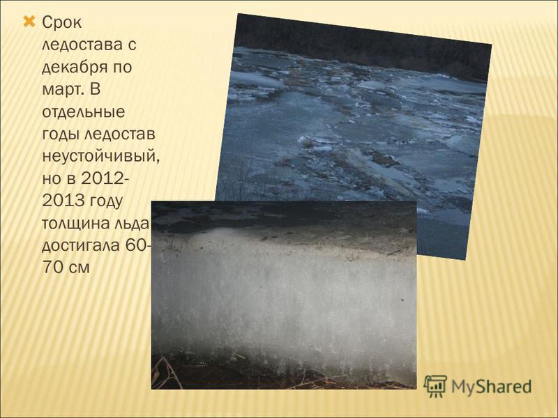 Срок ледостава с декабря по март. В отдельные годы ледостав неустойчивый, но в 2012- 2013 году толщина льда достигала 60- 70 см