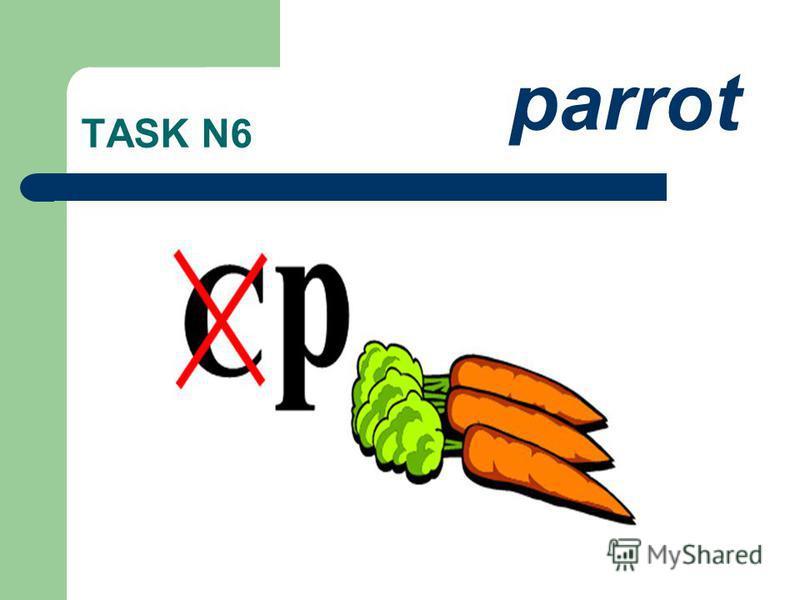 TASK N6 parrot