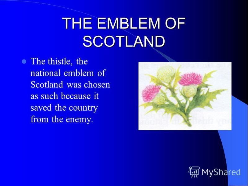 THE EMBLEM OF SCOTLAND The thistle, the national emblem of Scotland was chosen as such because it saved the country from the enemy.