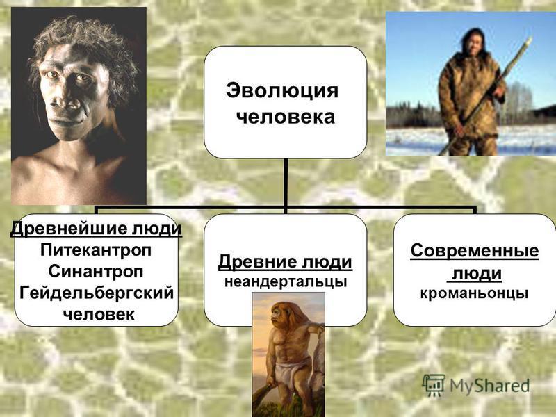 Эволюция человека Древнейшие люди Питекантроп Синантроп Гейдельбергский человек Древние люди неандертальцы Современные люди кроманьонцы