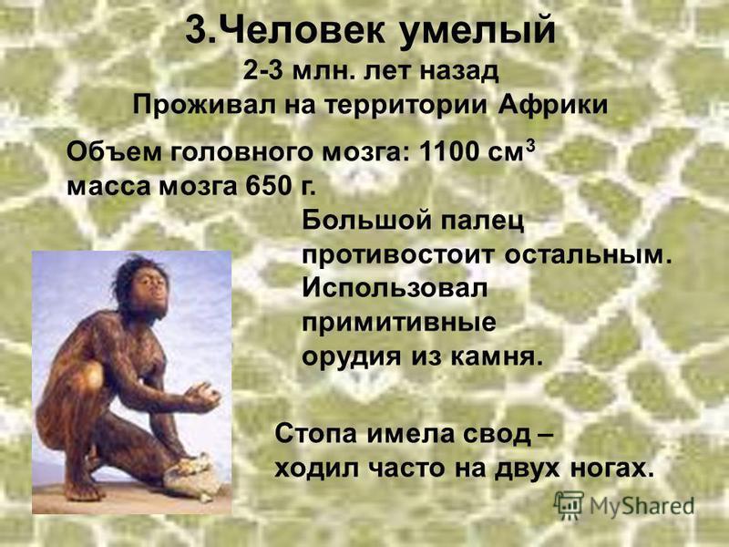 3. Человек умелый 2-3 млн. лет назад Проживал на территории Африки Объем головного мозга: 1100 см 3 масса мозга 650 г. Большой палец противостоит остальным. Использовал примитивные орудия из камня. Стопа имела свод – ходил часто на двух ногах.