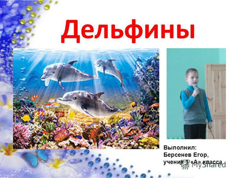 Дельфины Выполнил: Берсенев Егор, ученик 1 «А» класса