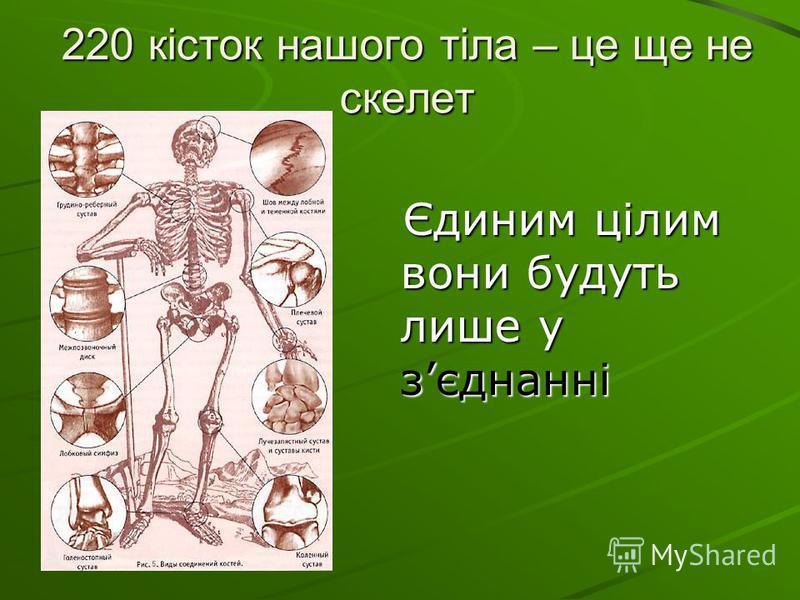 220 кісток нашого тіла – це ще не скелет Єдиним цілим вони будуть лише у зєднанні Єдиним цілим вони будуть лише у зєднанні