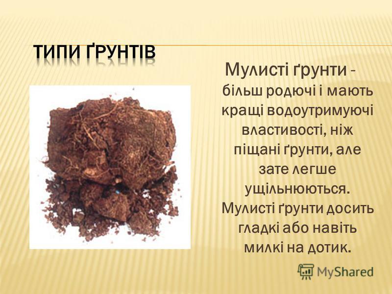 Мулисті ґрунти - більш родючі і мають кращі водоутримуючі властивості, ніж піщані ґрунти, але зате легше ущільнюються. Мулисті ґрунти досить гладкі або навіть милкі на дотик.