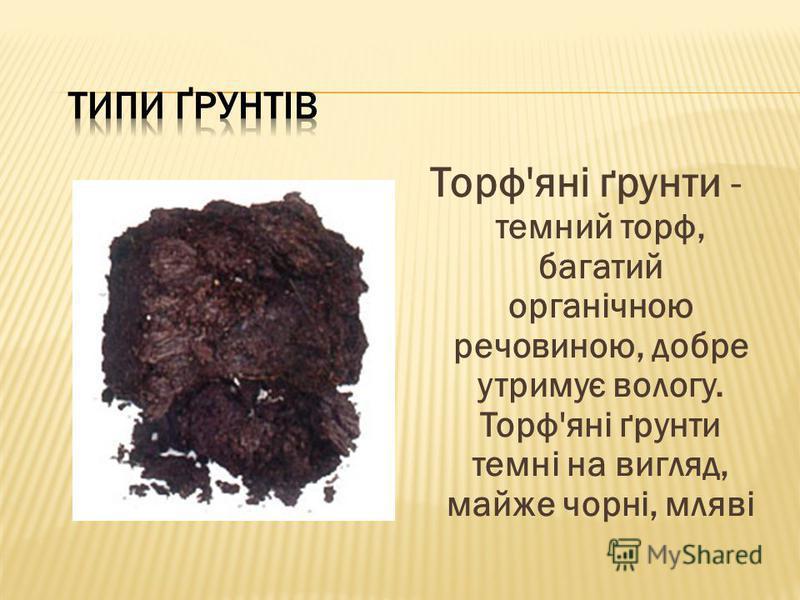 Торф'яні ґрунти - темний торф, багатий органічною речовиною, добре утримує вологу. Торф'яні ґрунти темні на вигляд, майже чорні, мляві