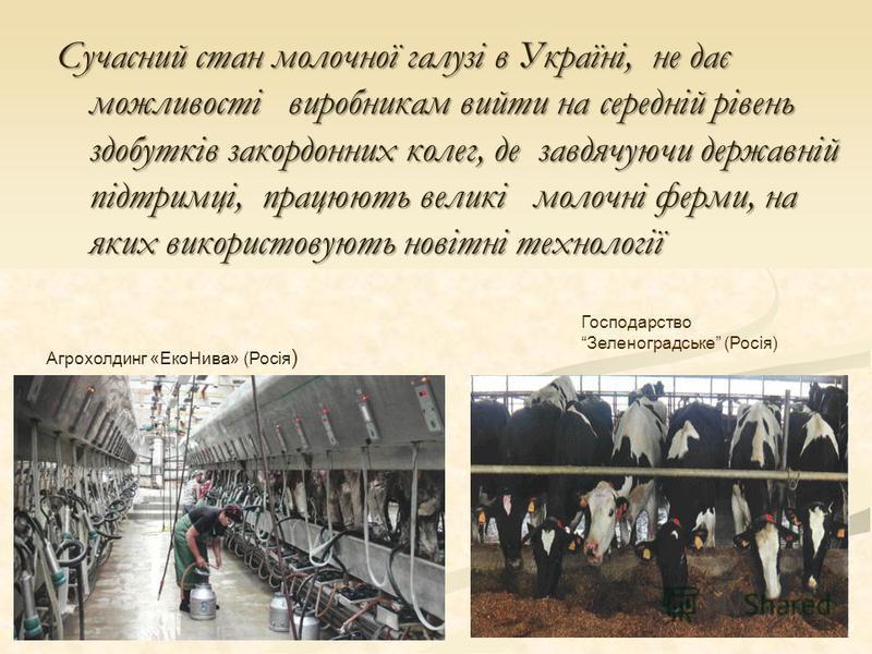 Сучасний стан молочної галузі в Україні, не дає можливості виробникам вийти на середній рівень здобутків закордонних колег, де завдячуючи державній підтримці, працюють великі молочні ферми, на яких використовують новітні технології Агрохолдинг «ЕкоНи