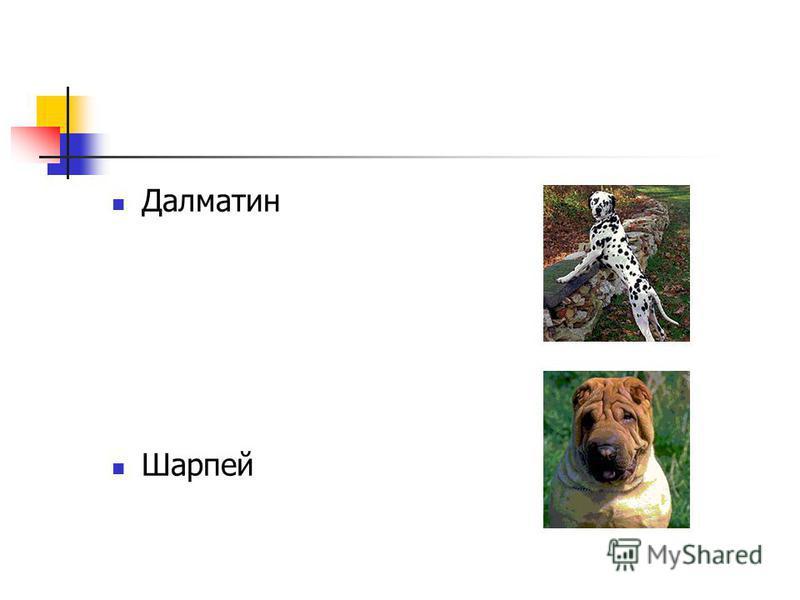 Далматин Шарпей