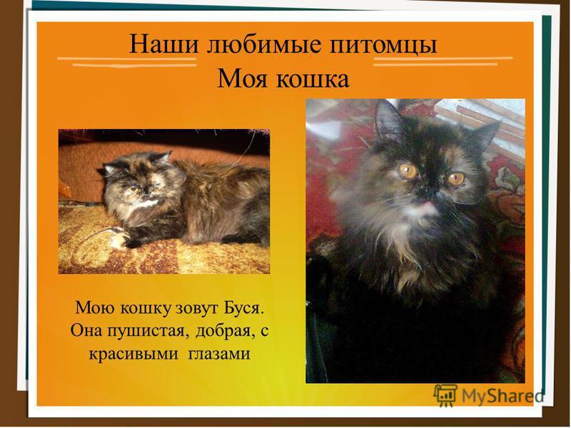 Наши любимые питомцы Моя кошка Мою кошку зовут Буся. Она пушистая, добрая, с красивыми глазами