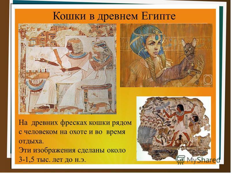 На древних фресках кошки рядом с человеком на охоте и во время отдыха. Эти изображения сделаны около 3-1,5 тыс. лет до н.э. Кошки в древнем Египте