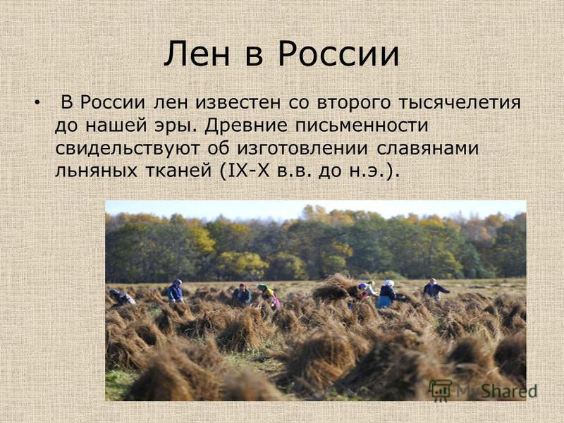 Лен в России В России лен известен со второго тысячелетия до нашей эры. Древние письменности свидетельствуют об изготовлении славянами льняных тканей (IX-X в.в. до н.э.).
