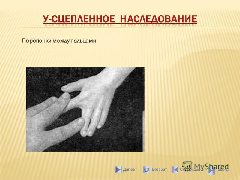 Перепонки между пальцами Выход Содержание Далее Возврат