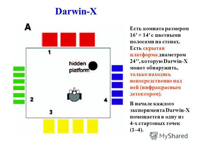 Darwin-X Есть комната размером 16 × 14 с цветными полосами на стенах. Есть скрытая платформа диаметром 24, которую Darwin-X может обнаружить, только находясь непосредственно над ней (инфракрасным детектором). В начале каждого эксперимента Darwin-X по